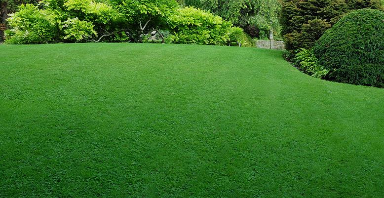 Top jardin votre paysagiste villerupt for Paysagiste petit jardin